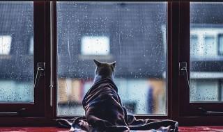 Дощі та сильний вітер: жителів Черкащини попереджають про зміну погодних умов